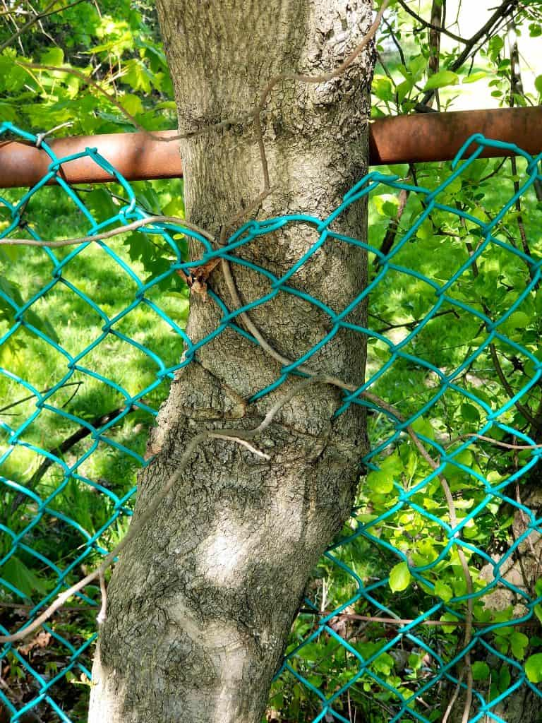 arboreal crochet