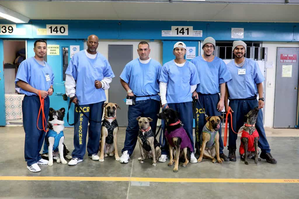 Paws 4 life Prison program dogs